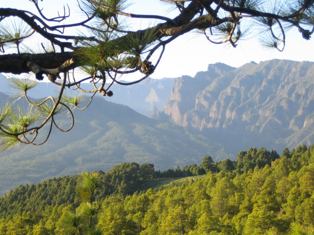 Angst als Kraft - die Magie der Angst hatte mich nach La Palma gebracht