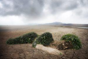 ausgelaugte Böden bringen magnesiumarme Lebensmittel hervor